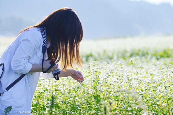桜井,笠の蕎麦畑(SDQ_2903,100 mm,F3.2)2016yaotomi.jpg