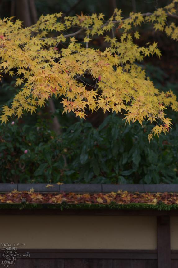 瑠璃光院紅葉_2012yaotomi_20.jpg