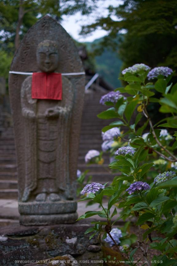 矢田寺,あじさい(DSCF6286,35mm,F1.6)2014yaotomi_.jpg