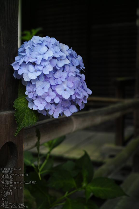 矢田寺紫陽花_2013yaotomi_10s.jpg