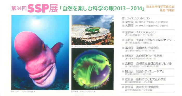第34回SSP展_2013yaotomi_1.jpg