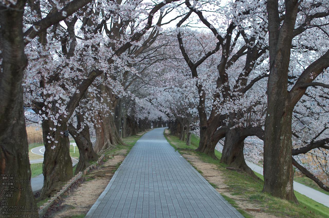 http://www.yaotomi.co.jp/blog/walk/%E8%83%8C%E5%89%B2%E5%A0%A4_%E6%A1%9C_2013yaotomi_13s.jpg