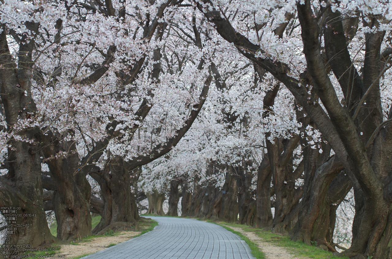 http://www.yaotomi.co.jp/blog/walk/%E8%83%8C%E5%89%B2%E5%A0%A4_%E6%A1%9C_2013yaotomi_25s.jpg