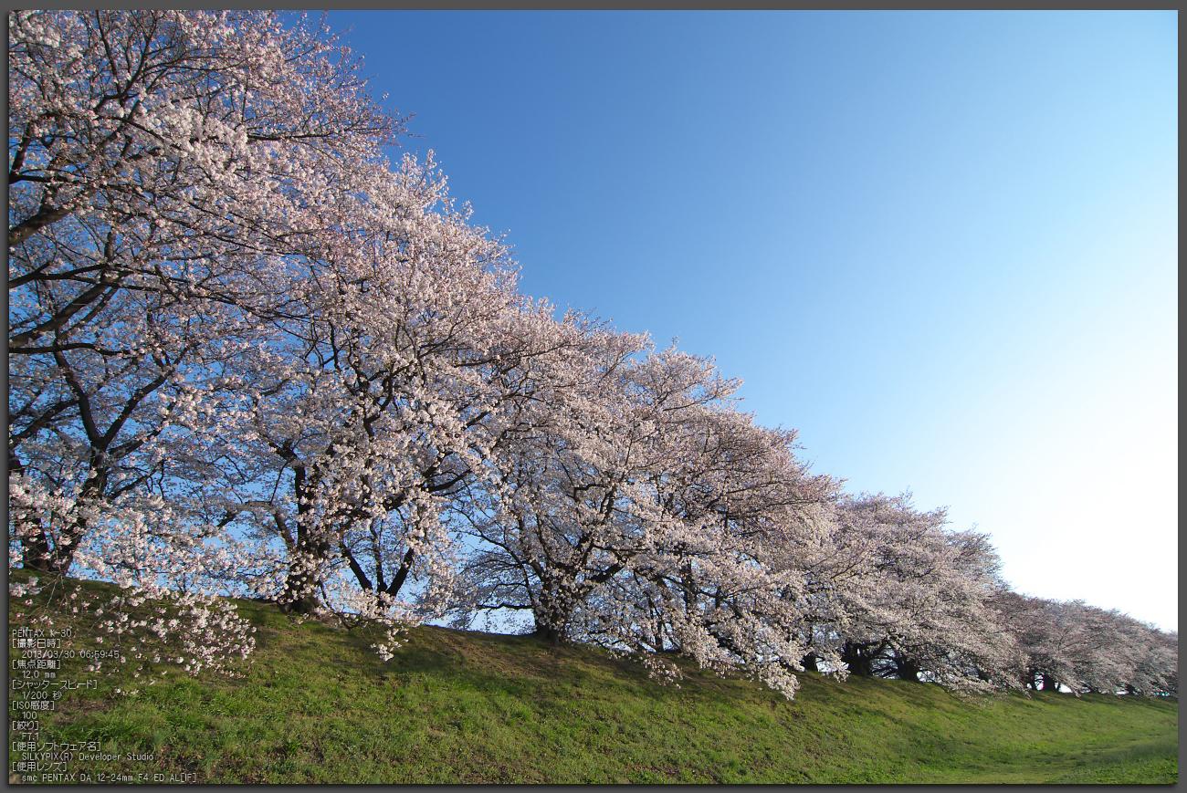 http://www.yaotomi.co.jp/blog/walk/%E8%83%8C%E5%89%B2%E5%A0%A4_%E6%A1%9C_2013yaotomi_56st.jpg