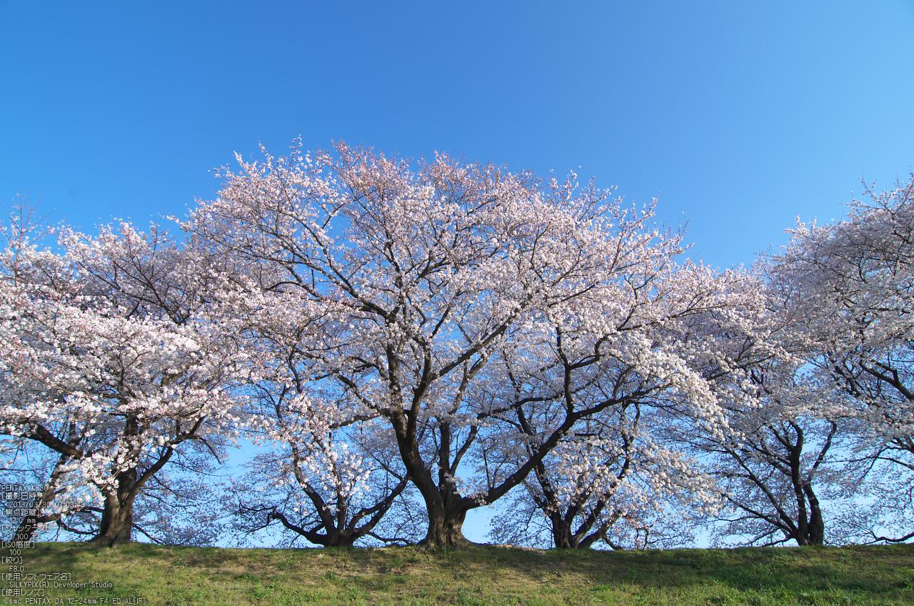 http://www.yaotomi.co.jp/blog/walk/%E8%83%8C%E5%89%B2%E5%A0%A4_%E6%A1%9C_2013yaotomi_58s.jpg