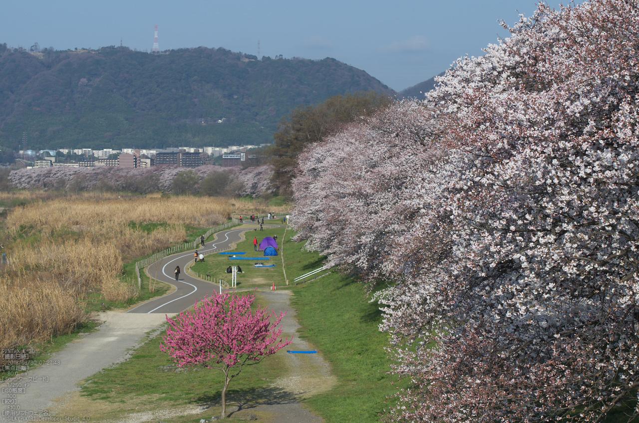 http://www.yaotomi.co.jp/blog/walk/%E8%83%8C%E5%89%B2%E5%A0%A4_%E6%A1%9C_2013yaotomi_71s.jpg