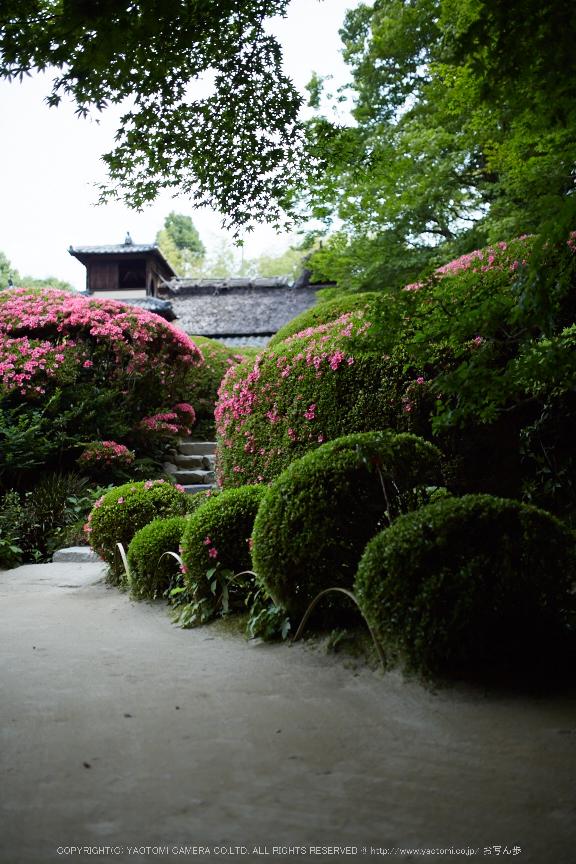 詩仙堂,さつき(5J7C0248,35mm,F1.6)2014yaotomi_.jpg
