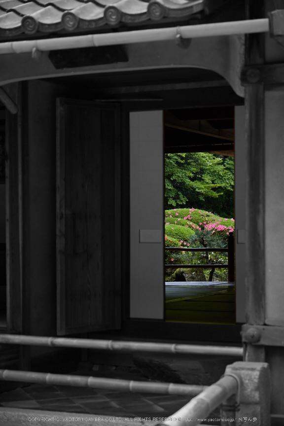 詩仙堂,さつき(5J7C0358,80mm,F4.5)2014yaotomi_BW.jpg