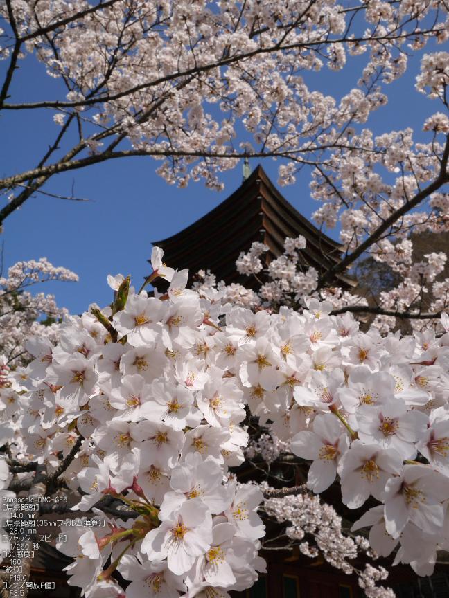 談山神社_桜_2012_GF5_yaotomi_3.jpg