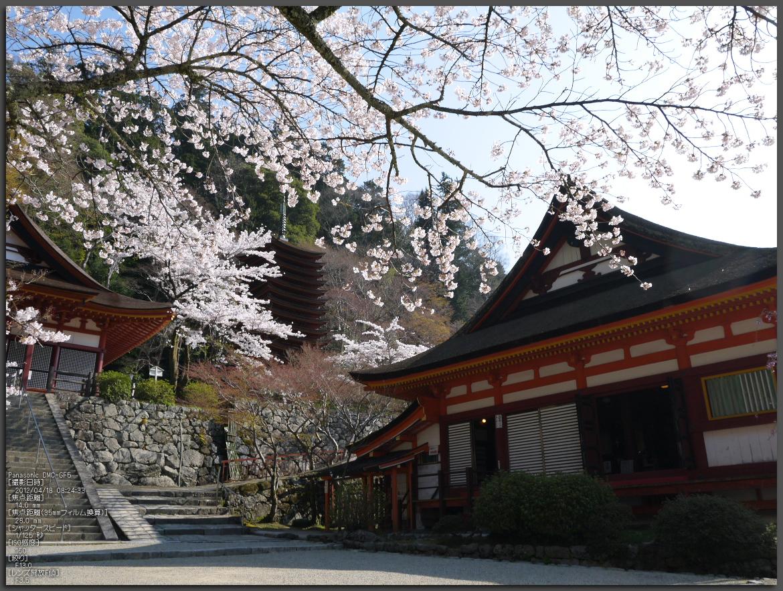 http://www.yaotomi.co.jp/blog/walk/%E8%AB%87%E5%B1%B1%E7%A5%9E%E7%A4%BE_%E6%A1%9C_2012_GF5_yaotomi_top1.jpg