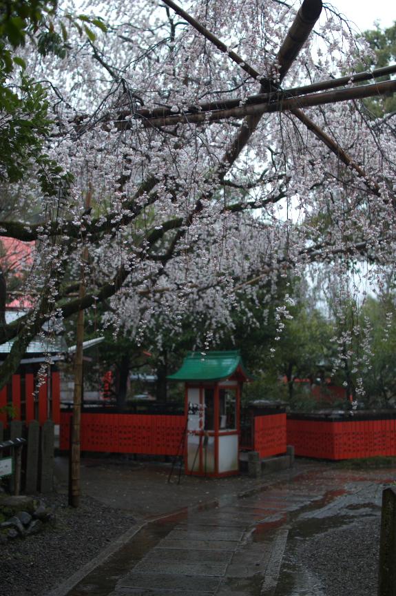 車折神社,桜_2014yaotomi_PK3_7721(F1,6_30mm).jpg