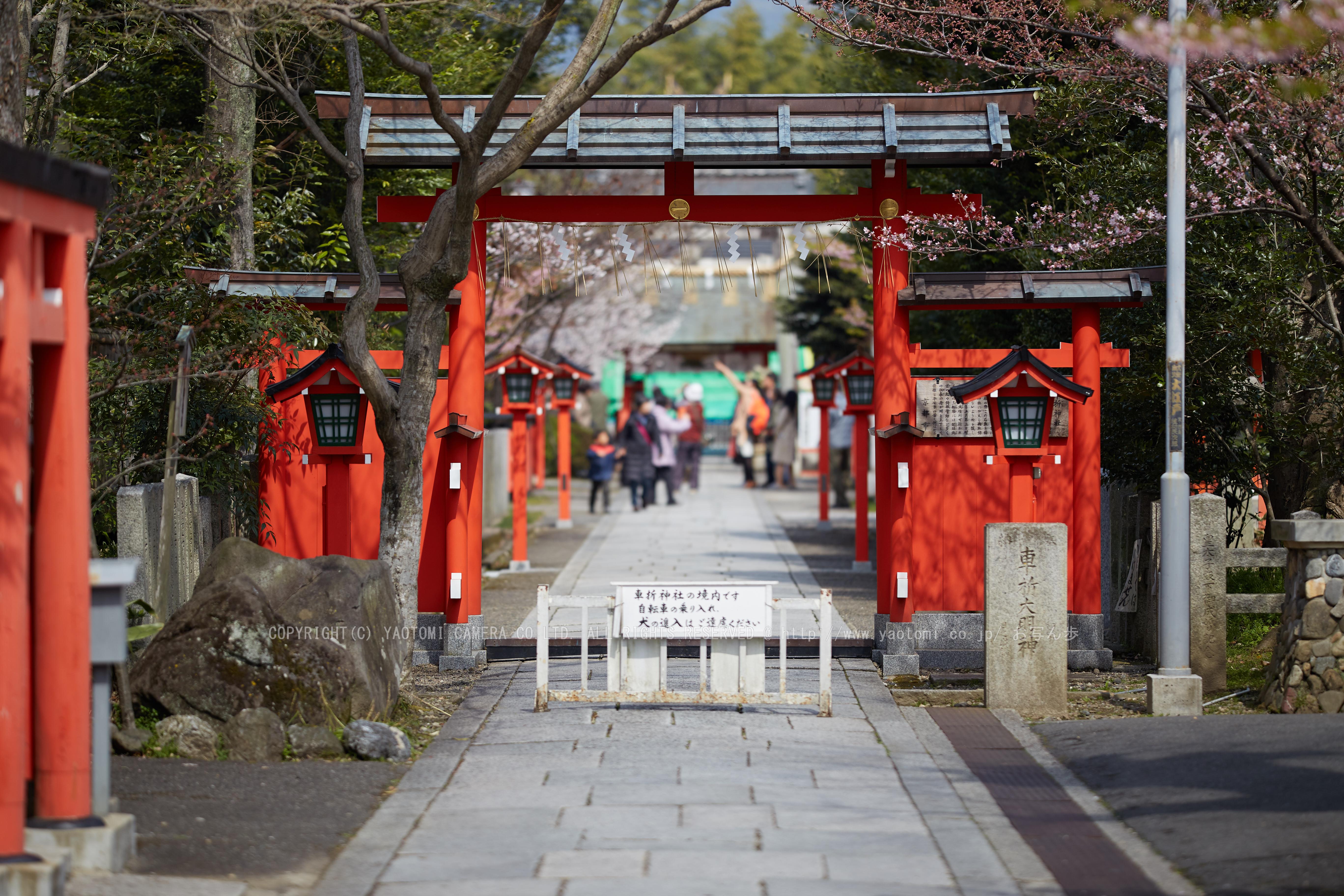 http://www.yaotomi.co.jp/blog/walk/%E8%BB%8A%E6%8A%98%E7%A5%9E%E7%A4%BE%E3%81%AE%E6%A1%9C_IMG_6557%2C2017yaotomi%202.jpg
