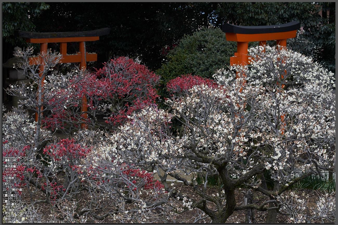 http://www.yaotomi.co.jp/blog/walk/%E9%81%93%E6%98%8E%E5%AF%BA%E5%A4%A9%E6%BA%80%E5%AE%AE_%E6%A2%85_2013yaotomi_1st.jpg