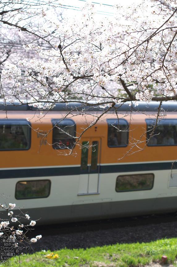郡山城跡_桜_2013yaotomi_31s.jpg