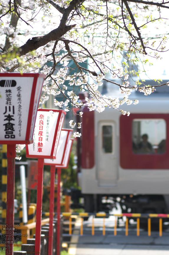 郡山城跡_桜_2013yaotomi_6s.jpg