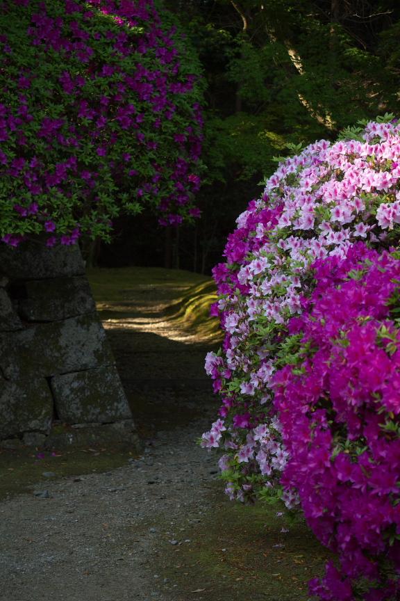 長岳寺,つつじ(P1120533,47mm,F2,8)2014yaotomi_.jpg