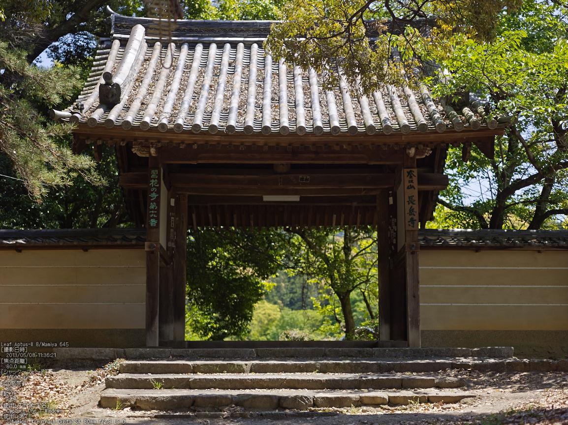 http://www.yaotomi.co.jp/blog/walk/%E9%95%B7%E5%B2%B3%E5%AF%BA%E3%81%AE%E3%83%84%E3%83%84%E3%82%B8_2013yaotomi_2s.jpg