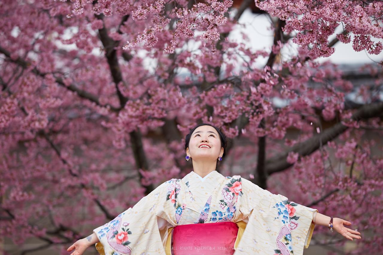 http://www.yaotomi.co.jp/blog/walk/%E9%95%B7%E5%BE%B3%E5%AF%BA%E3%81%8A%E3%81%8B%E3%82%81%E6%A1%9C_IMG_7114_F%2C2017yaotomi.jpg