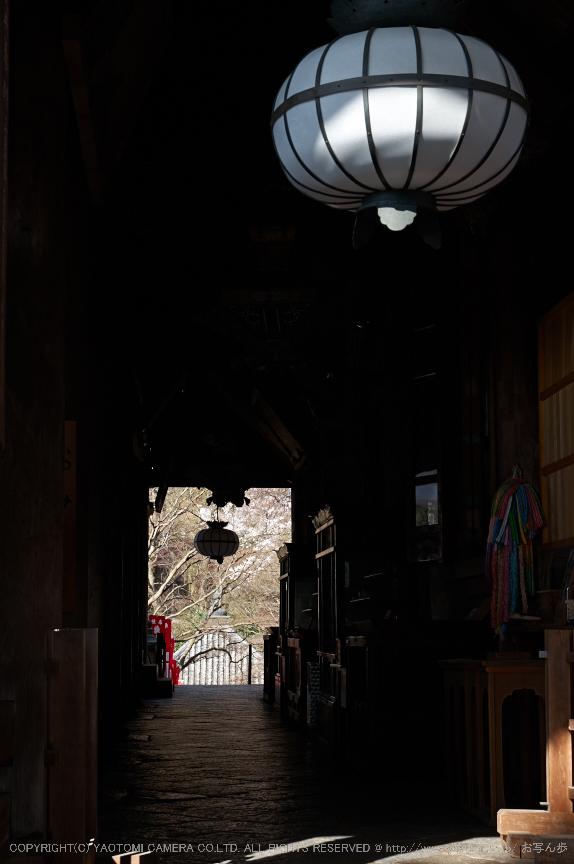 長谷寺,桜(PK3_8369,F7.1,45mm)2014yaotomi_.jpg