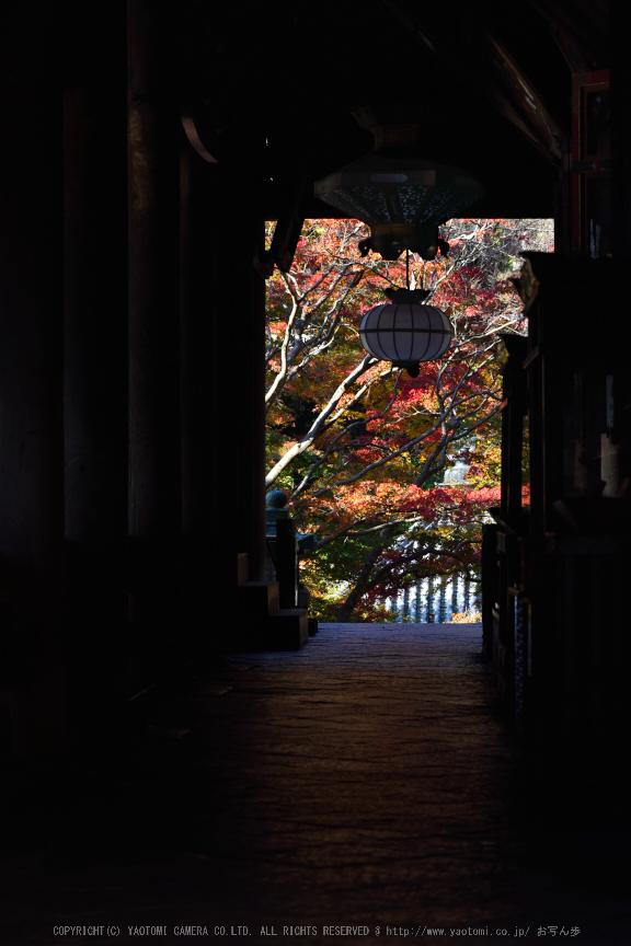 長谷寺,紅葉(DSC_1071,120mm,F7.1,D750)2014yaotomi (1) .jpg