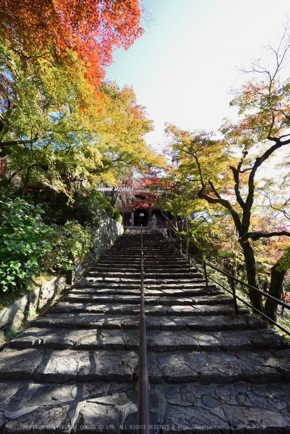 長谷寺,紅葉(DSC_1207,14mm,F9,D750)2014yaotomi.jpg