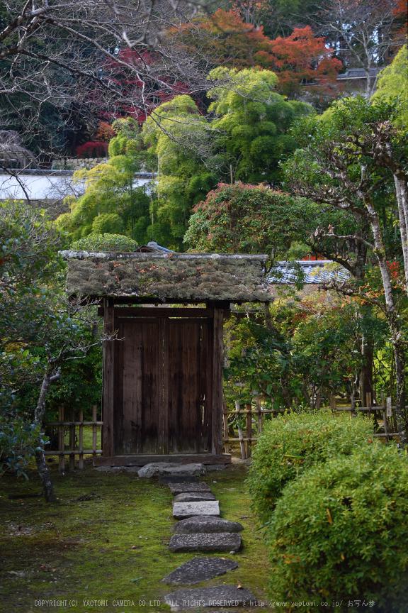 長谷寺,紅葉(DSC_1286,48mm,F4,D750)2014yaotomi.jpg