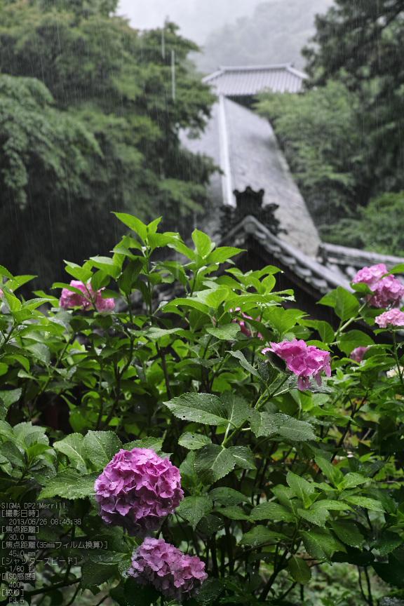 長谷寺の紫陽花_2013yaotomi_12s.jpg