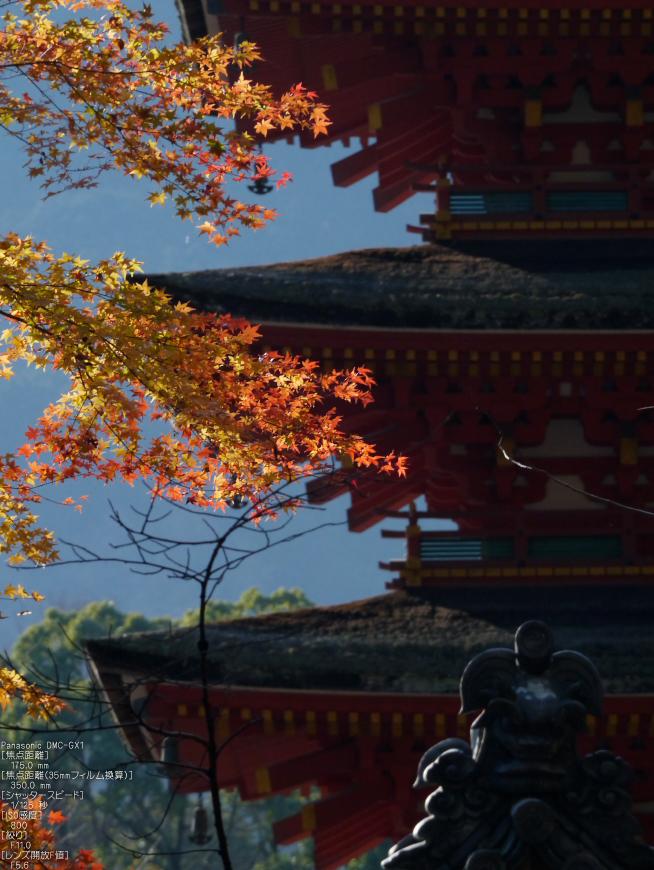 長谷寺紅葉_2011_19.jpg
