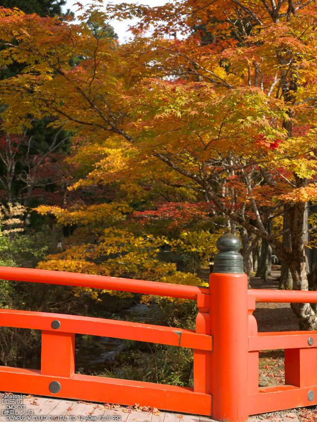 高野山,紅葉(Panasonic,GX7)_2013yaotomi_23s.jpg