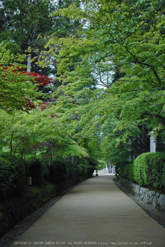 高野山,6月(SDIM0169,F2.8)2014yaotomi_.jpg