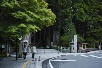 高野山,6月(SDIM0214,F2.8)2014yaotomi_s.jpg
