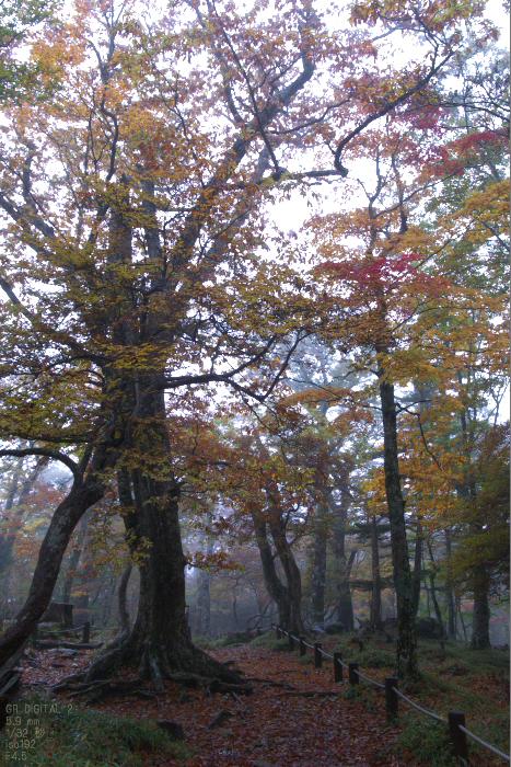 201010_大台ヶ原紅葉_7.jpg