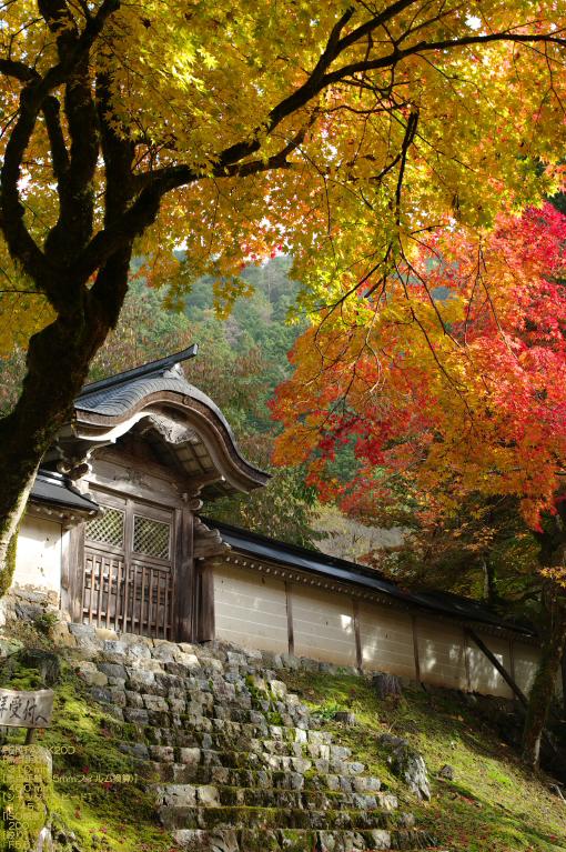 2010_常照皇寺・紅葉_5.jpg