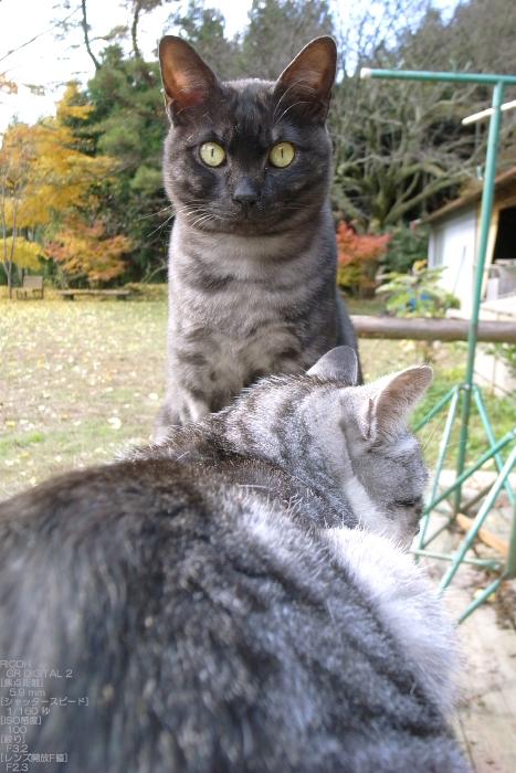 2010_月うさぎ・紅葉_7.jpg