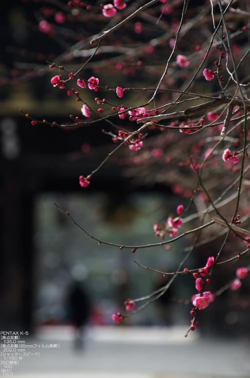 2011_北野天満宮・初梅_12.jpg