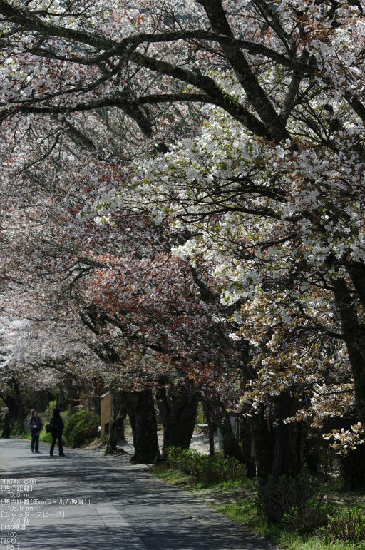 2011_4_三多気・桜_25.jpg