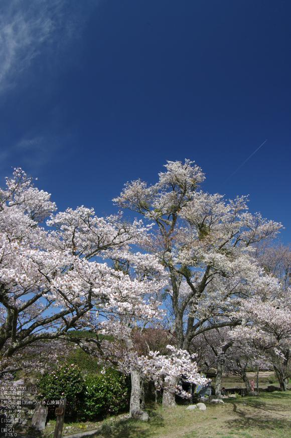 2011_4_三多気・桜_6.jpg