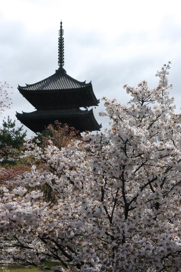 2011_4_仁和寺・桜_5.jpg