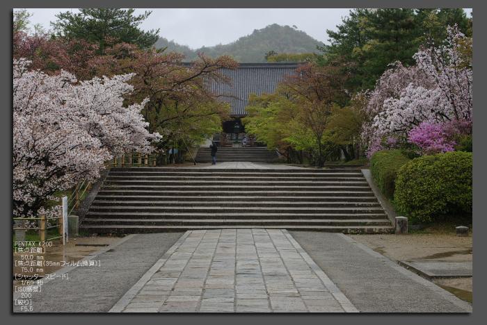2011_4_仁和寺・桜_top.jpg