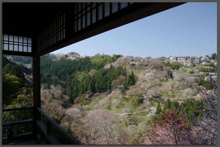 2011_4_吉野山・桜_t3.jpg