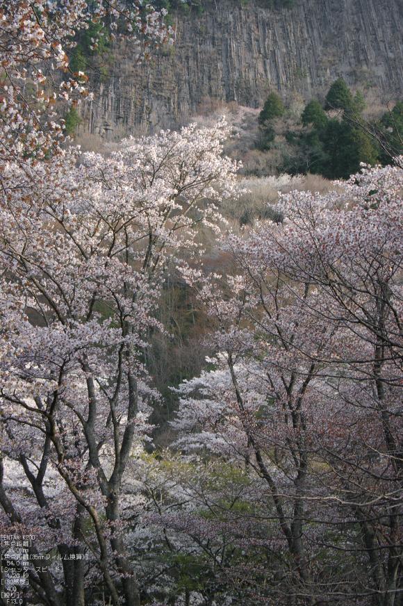 2011_4_屏風岩・桜_7.jpg