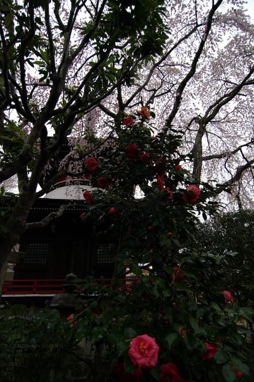2011_4_東南院_30.jpg