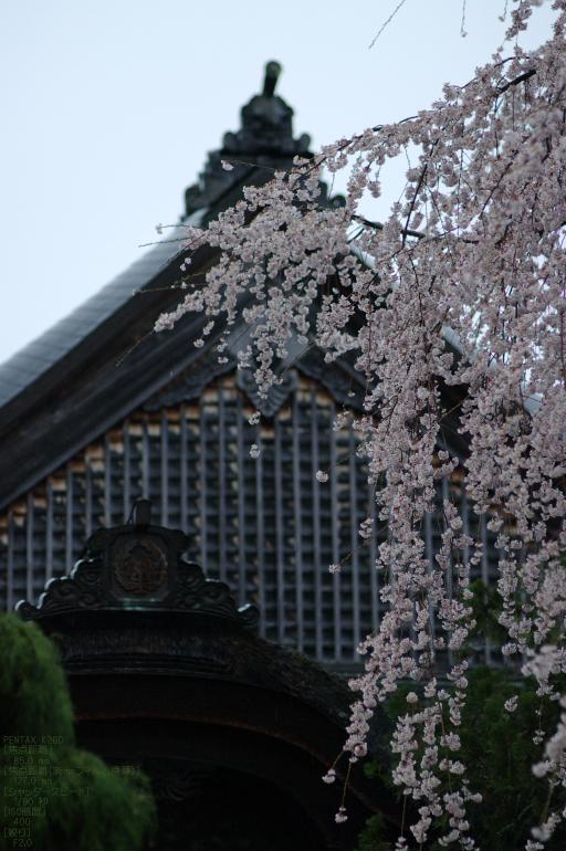 2011_4_東南院_31.jpg