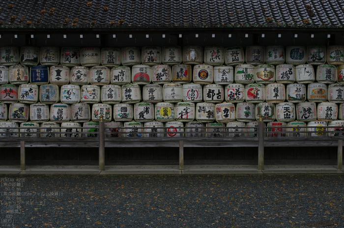 2011_4_松尾大社・山吹_9.jpg