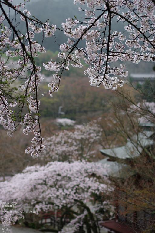 2011_4_談山神社・桜_10.jpg