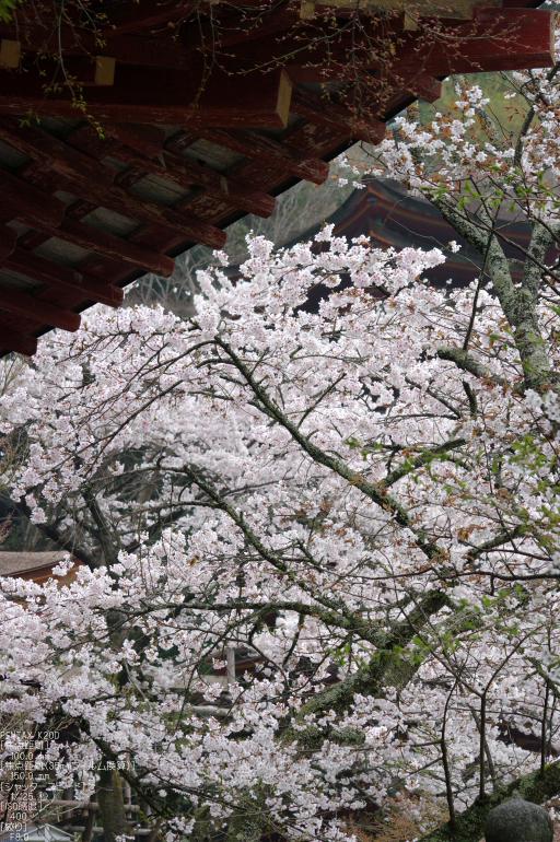2011_4_談山神社・桜_14.jpg
