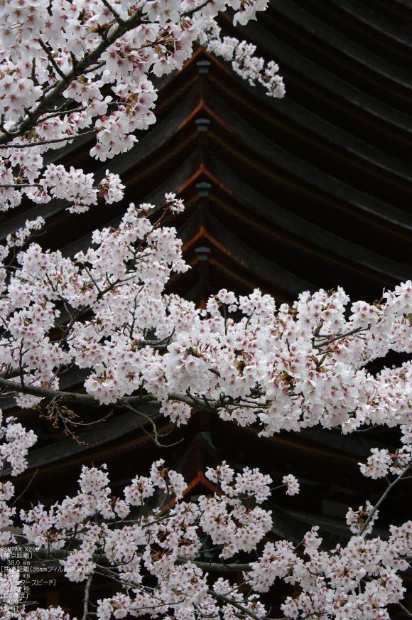 2011_4_談山神社・桜_9.jpg