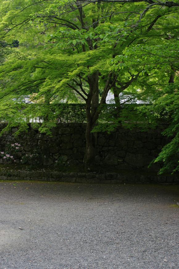 2011_5_南禅寺・新緑_8.jpg