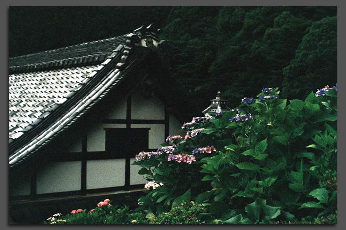 2011_7_柳谷観音・紫陽花_top.jpg