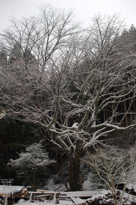2012冬_月うさぎ_7.jpg
